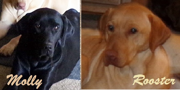 Desert Wind's Black Molly Girl and Desert Wind's Big Red Rooster